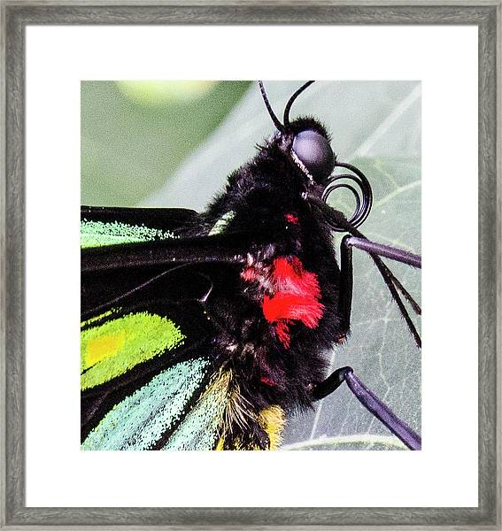 Color Up Close Framed Print