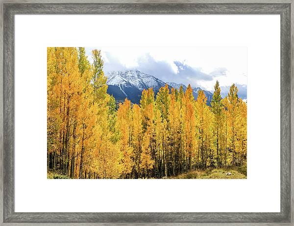 Colorado Aspens And Mountains 1 Framed Print