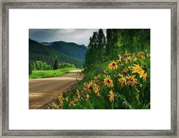 Framed Print featuring the photograph Colorado Wildflowers by John De Bord