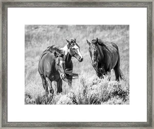 Colorado's Finest  Framed Print
