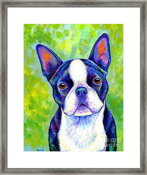 Colorful Boston Terrier Dog Framed Print