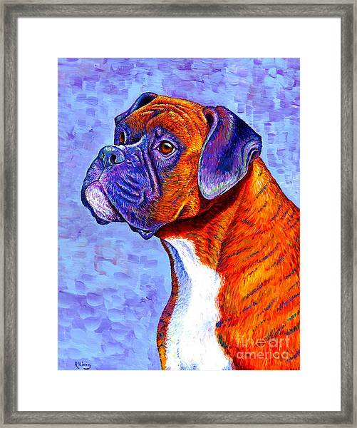 Colorful Brindle Boxer Dog Framed Print