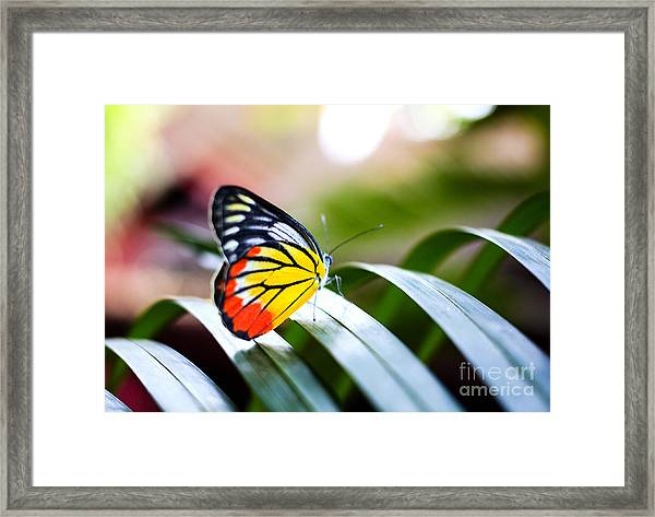 Colorful Butterfly Resting On The Palm Framed Print