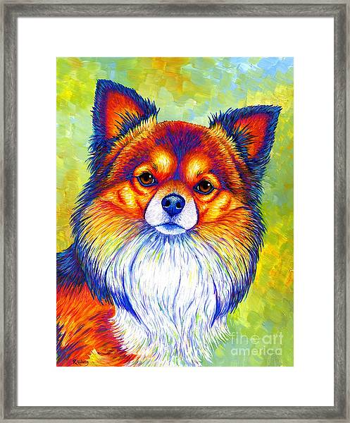 Colorful Long Haired Chihuahua Dog Framed Print