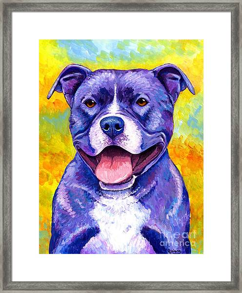 Colorful Pitbull Terrier Dog Framed Print