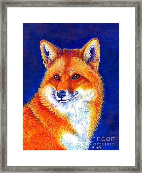 Colorful Red Fox Framed Print