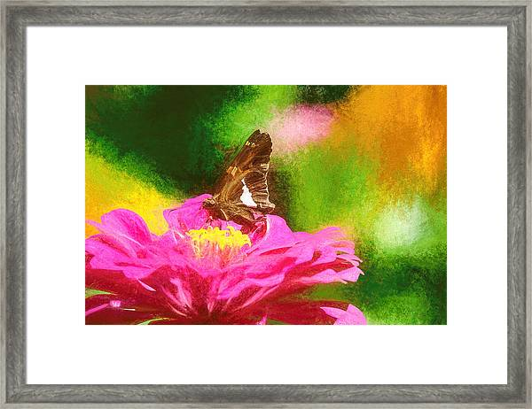 Colorful Silver Spotted Skipper Butterfly Framed Print