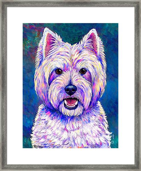 Colorful West Highland White Terrier Blue Background Framed Print