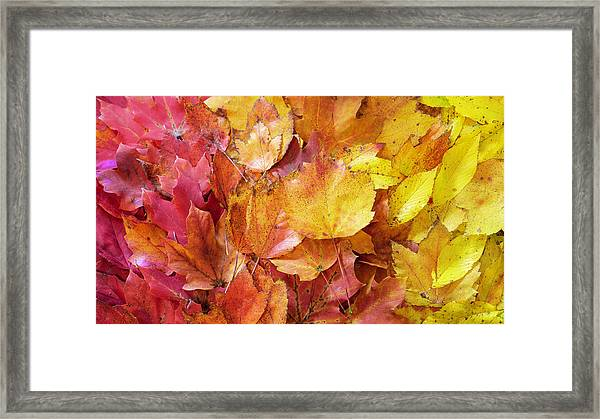 Colors Of Fall - Red To Yellow Framed Print