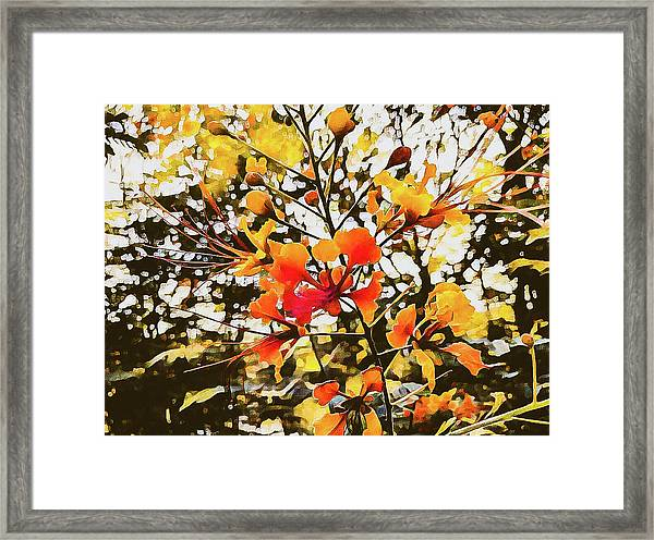 Colourful Leaves Framed Print