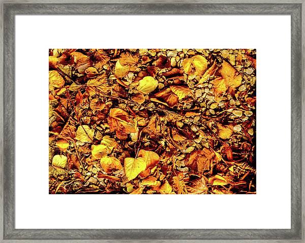 Colours. Autumn Gold Framed Print