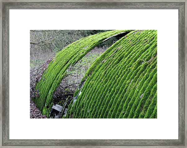 Colours. Green Framed Print