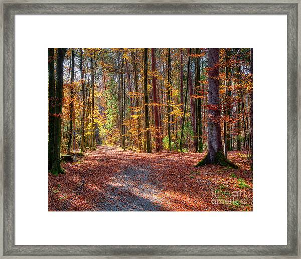Colours Of Nature Framed Print