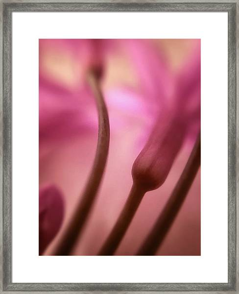 Coming Up Framed Print
