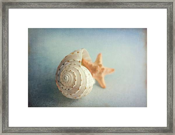 Conch Shell And Starfish Framed Print