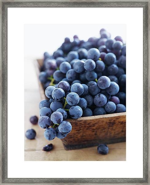 Concord Grapes Framed Print