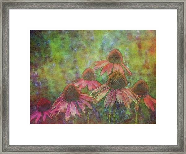 Coneflowers Among The Lavender 1667 Idp_2 Framed Print