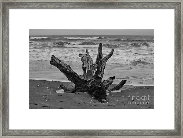 Framed Print featuring the photograph Contrasting Textures by Jeni Gray