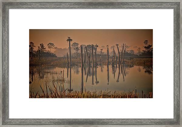 Cool Day At Viera Wetlands Framed Print