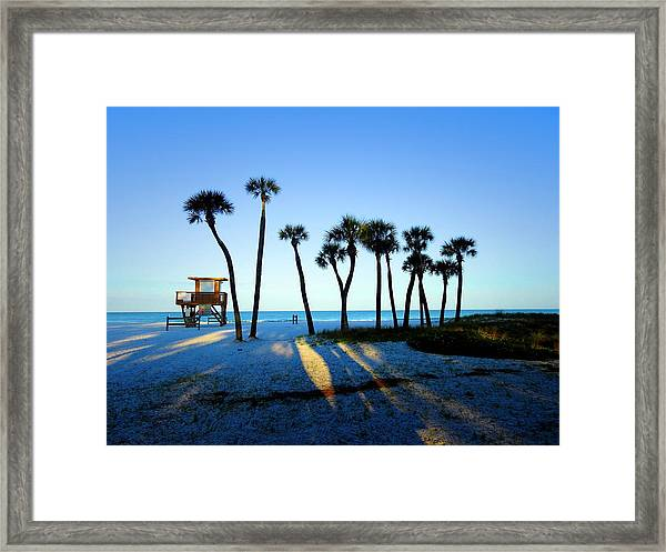 Coquina Palms Framed Print