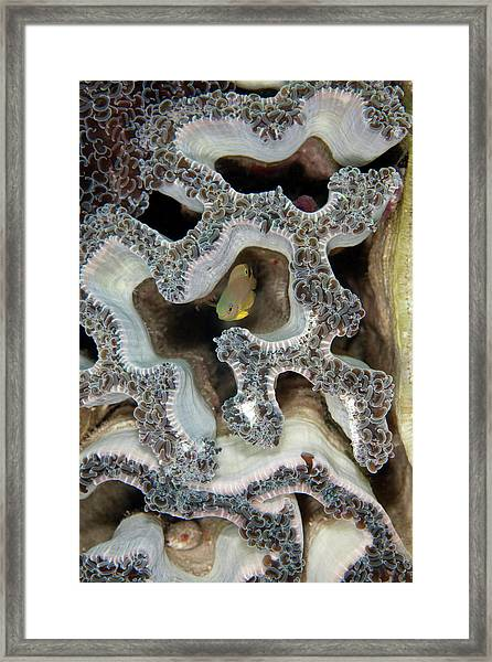 Coral Maze Framed Print by Nature, Underwater And Art Photos. Www.narchuk.com