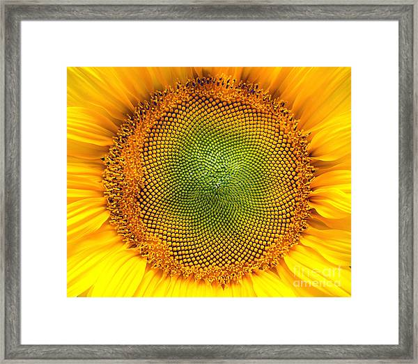 Core Of Of The Flower, Texture Framed Print