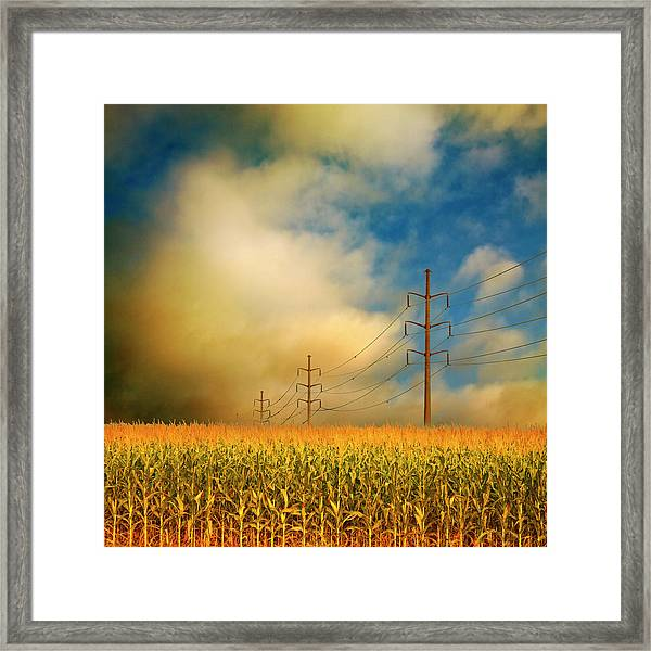 Corn Field At Sunrise Framed Print