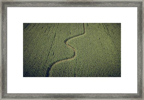 Framed Print featuring the photograph Corn Field by Steve Stanger
