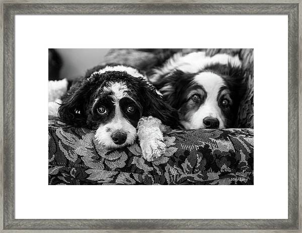 Couch Potatoes Framed Print