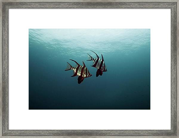 Couple Of Fish Framed Print