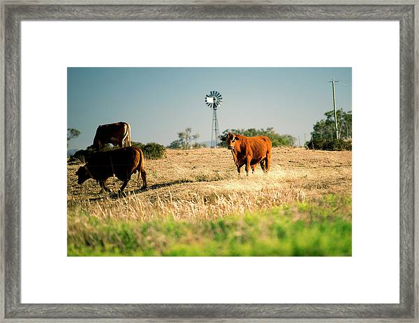 Framed Print featuring the photograph Cows And A Windmill In The Countryside. by Rob D Imagery