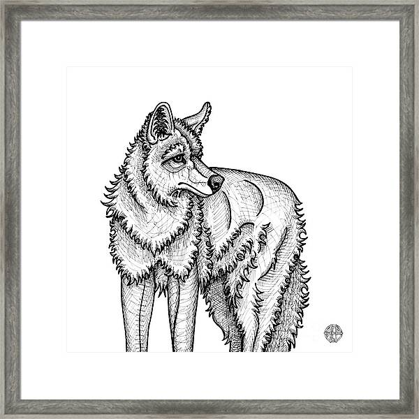 Framed Print featuring the drawing Coyote by Amy E Fraser