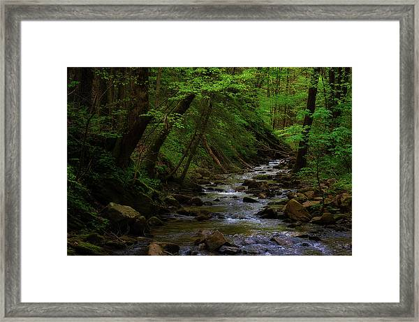 Framed Print featuring the photograph Creek Flowing Through Shady Forest by Dee Browning