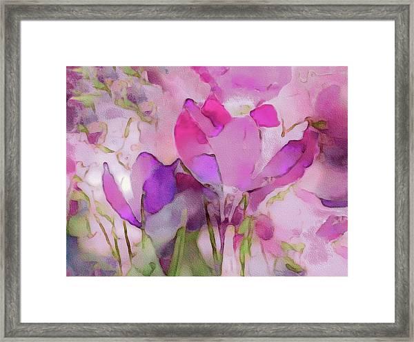Crocus So Pink Framed Print
