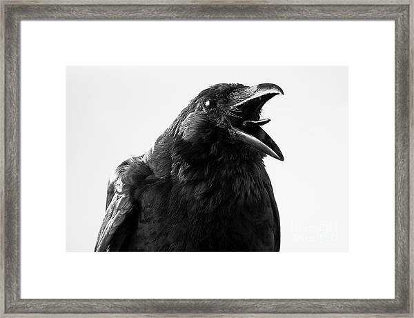 Crow In Studio Framed Print