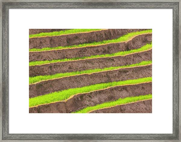 Cultivated Terraced Fields, Paro Framed Print