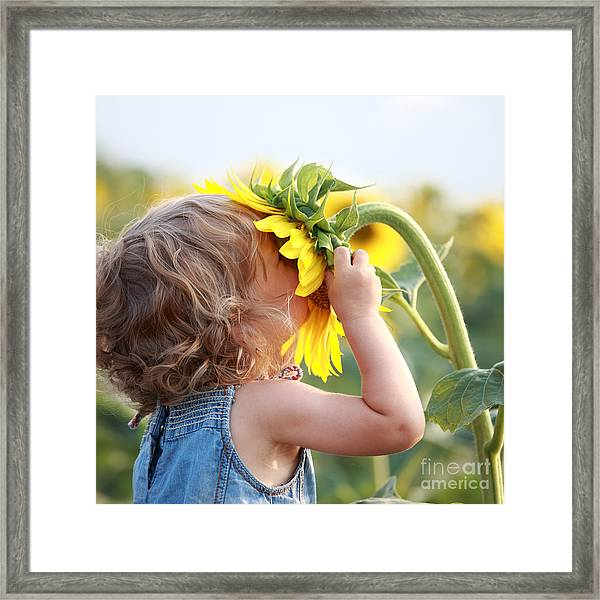 Cute Child With Sunflower In Summer Framed Print