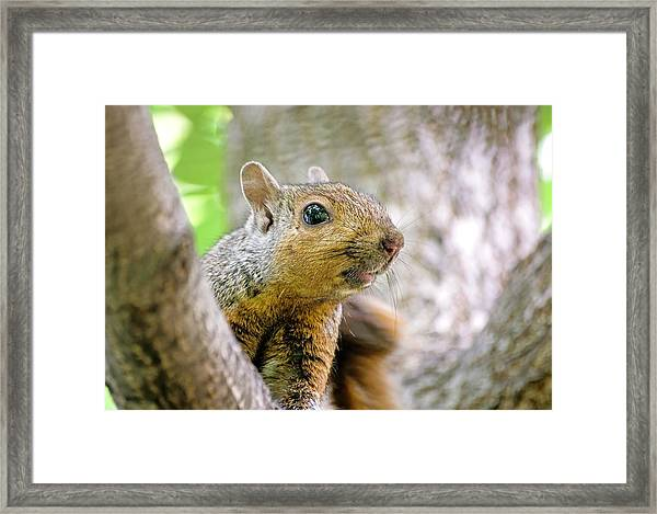 Cute Funny Head Squirrel Framed Print