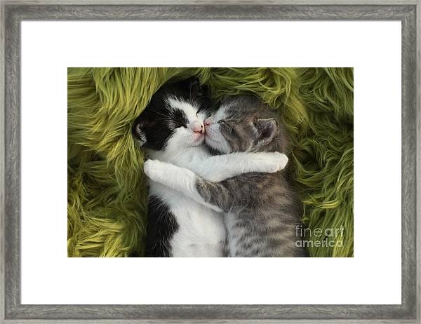 Cute Little Kittens Outdoors In Natural Framed Print