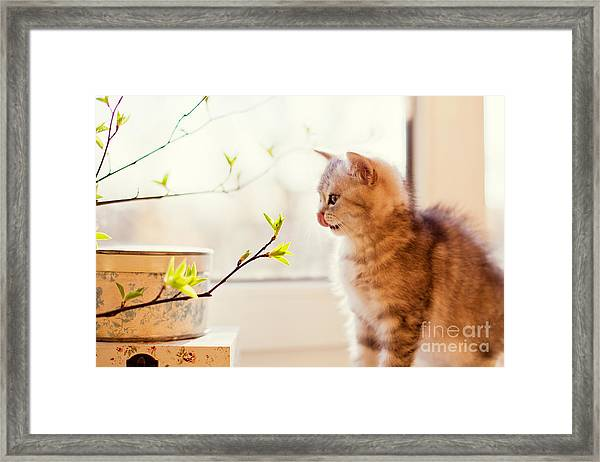 Cute Little Kitty Playing With Green Framed Print