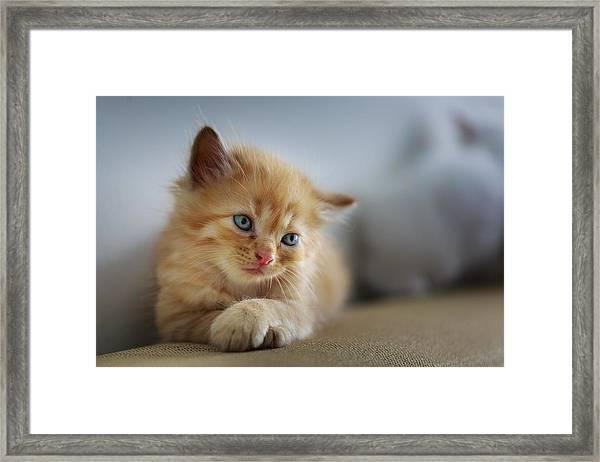 Cute Orange Kitty Framed Print