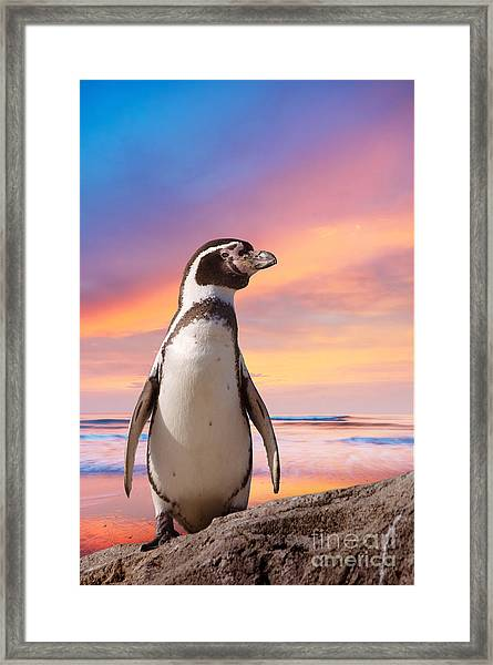 Cute Penguin With Sunset Background Framed Print