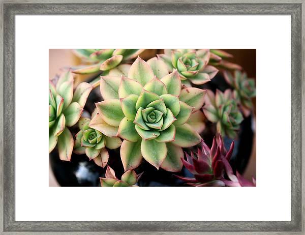 Cute Succulent Framed Print