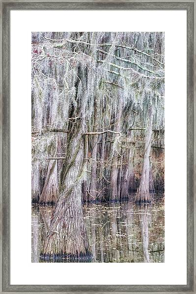 Cypress Dance - Jo Ann Tomaselli Framed Print