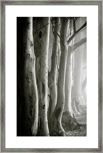 D0805 - Gumtrees Framed Print