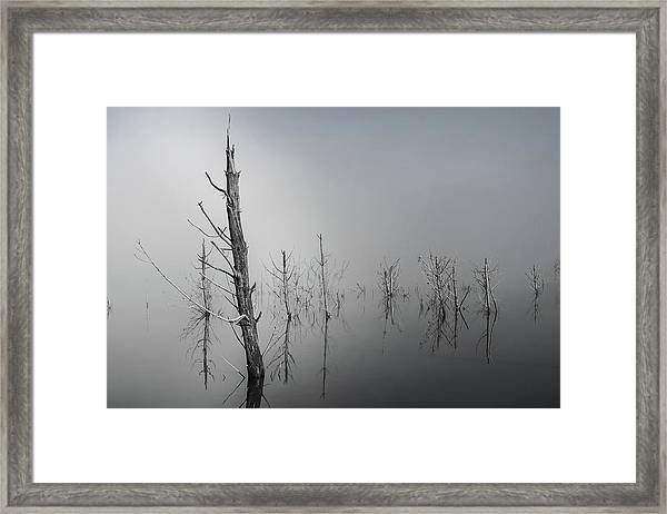 D1087 - Theewaterskloof Trees Framed Print