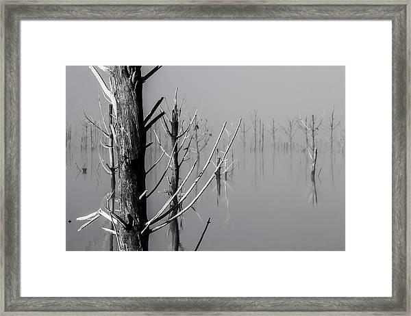 D1095 - Theewaterskloof Trees Framed Print