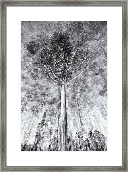 D1654p Framed Print