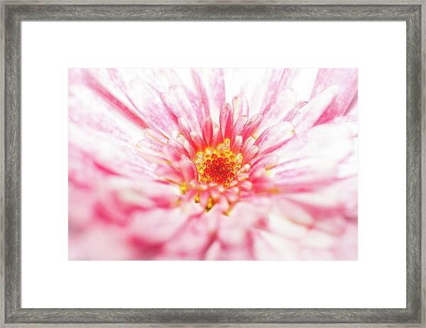 D3384 Framed Print