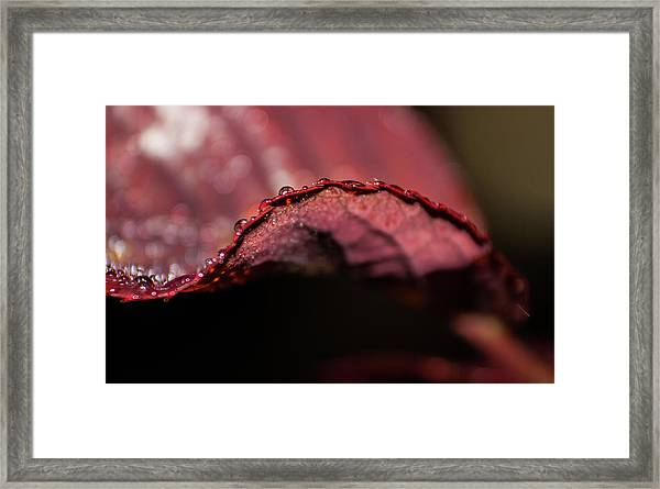D3568 Framed Print